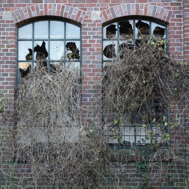 Pflanzen erobern die Knechtschen Hallen in Elmshorn Ellas Schreibwelt